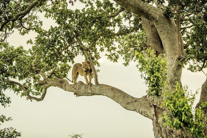 Uganda_T_QE-1826.jpg