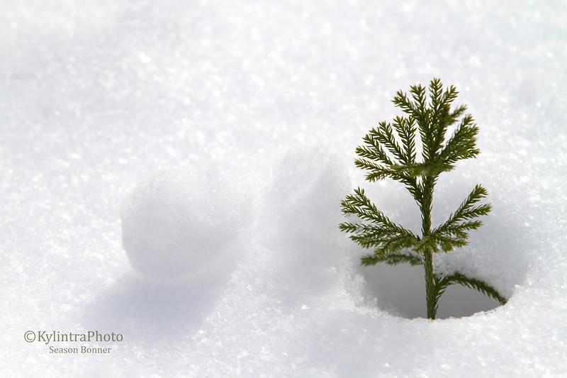 New Tree-0700.jpg