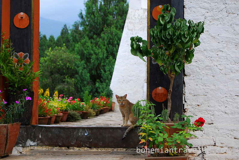 cat at Punakha Dzong Fortress Bhutan.jpg