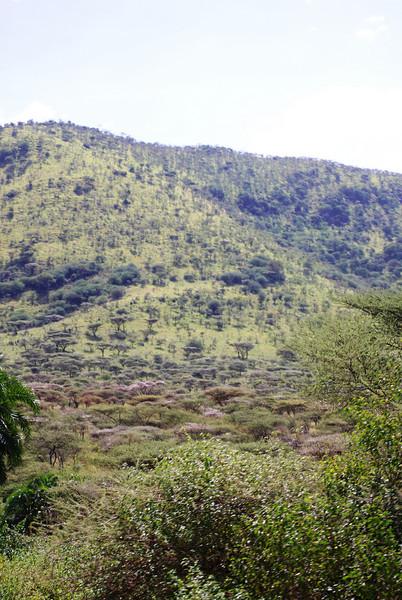 Serengeti (66).JPG
