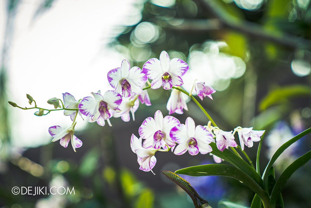 Gardens by the Bay - Orchid Extravaganza 2018 / Elegance in the sun