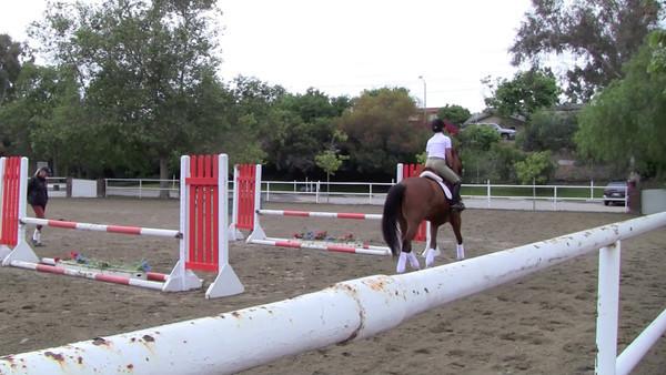 Steve's Horses