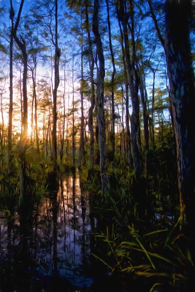 Swamp's First LightCezanne !! 80%.jpg