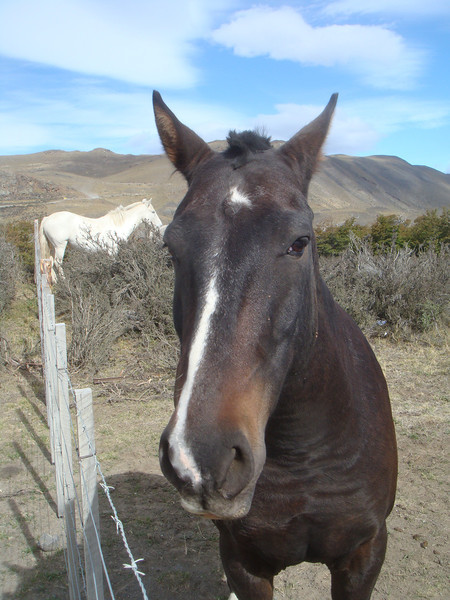 A happy horse at an estancia near Torres del Paine National Park, Chile.