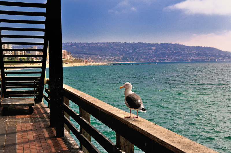Redondo Beach Pier-5.jpg