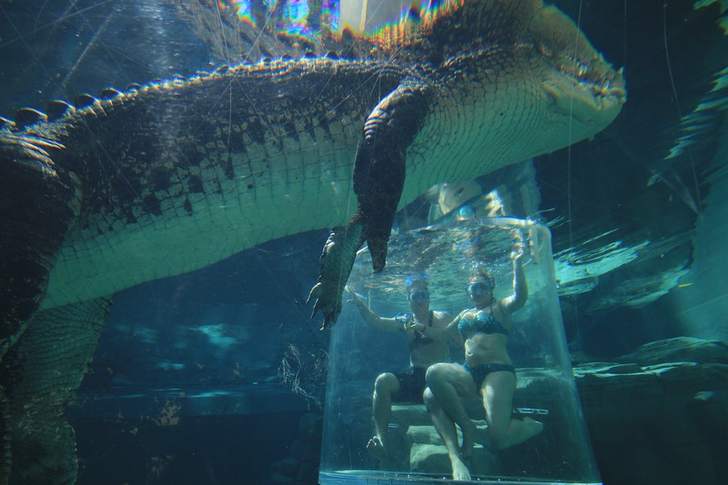 Crocosaurus Cove in Darwin