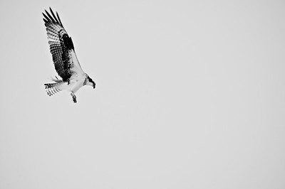 Birds (B&W)