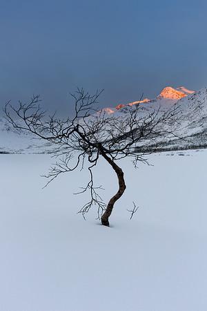 Scandinavian Snow