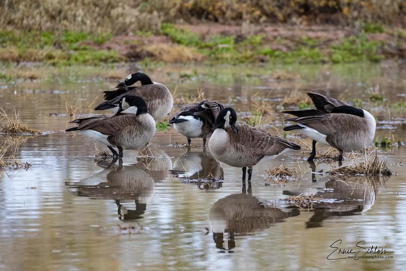 Gilbert Water Park 1-42-2019h-0101.jpg