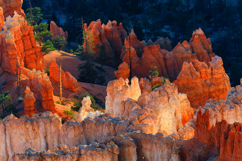 Bryce Canyon Morning Light