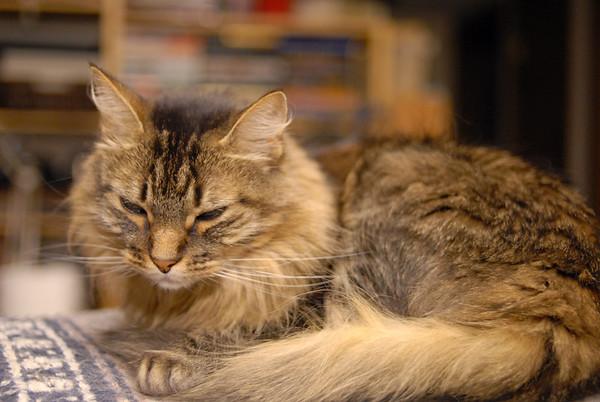 Windypundit Catblogging 2007
