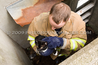 Kitten Rescue (Shelton, CT) 6/23/09