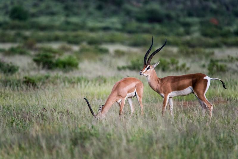 Samburu (28 of 70).jpg