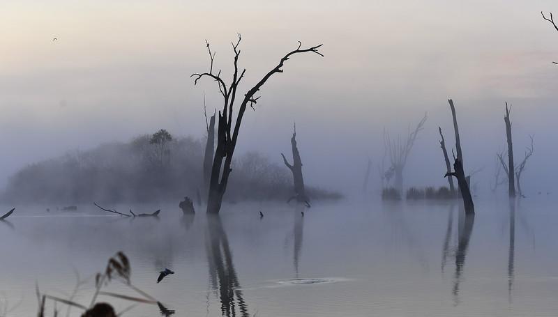 Fog sunrise morning