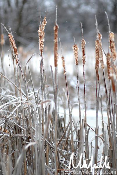 Snow1-29-10-006.jpg