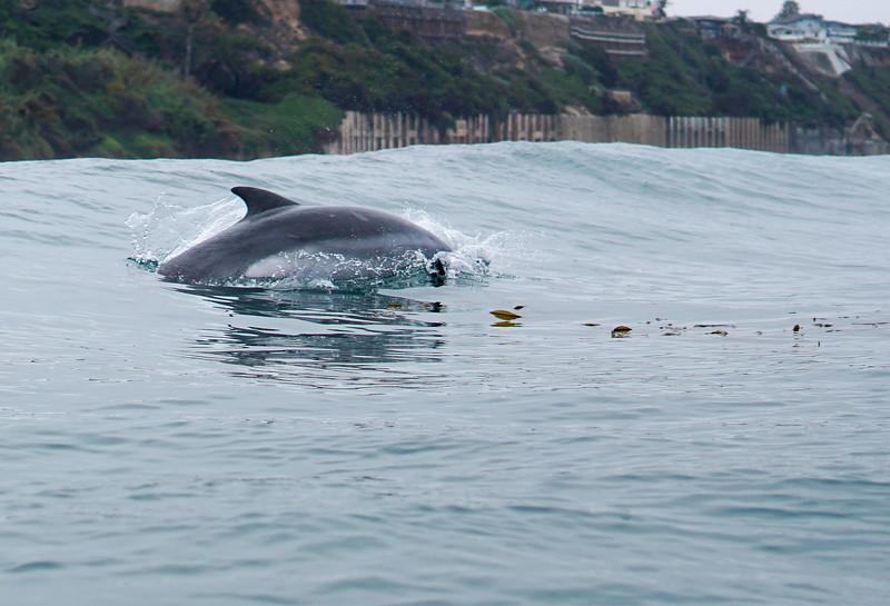 Beacons dolphins-24.jpg