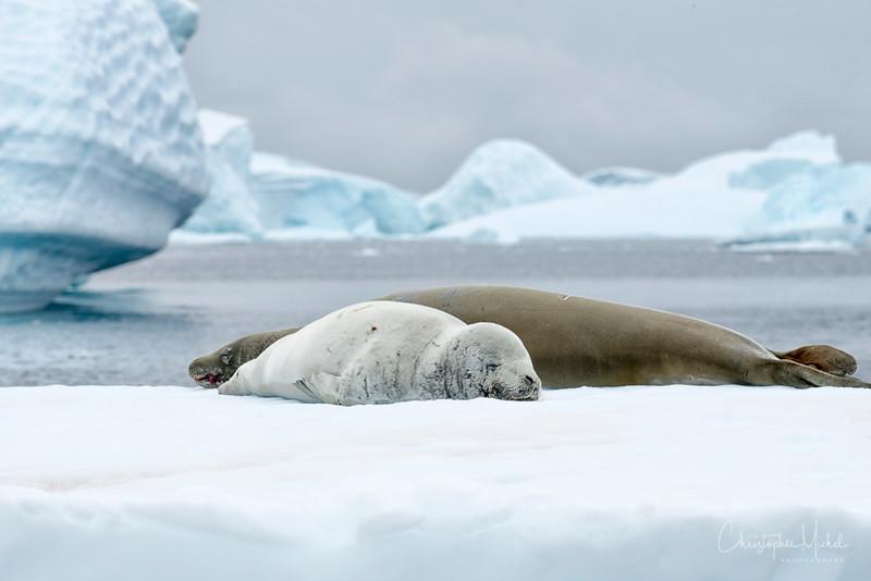 icebergs_pleneau_island_lemaire_20130106_7981.jpg