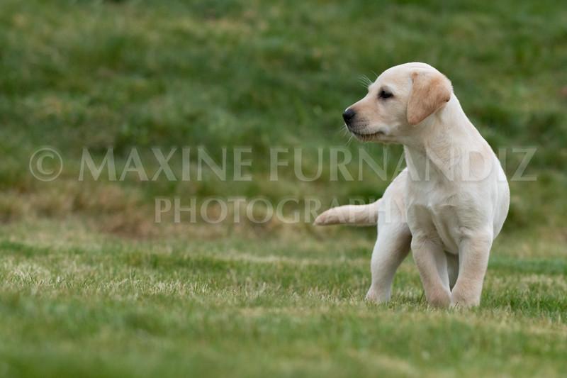 Weika Puppies 24 March 2019-6704.jpg