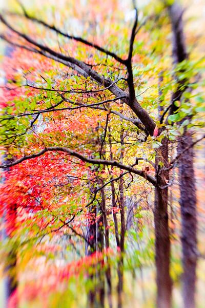Japanese_Laser_Trees.jpg