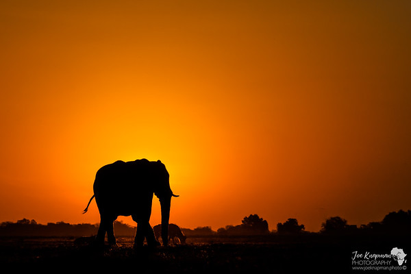 Elephant Eclipse
