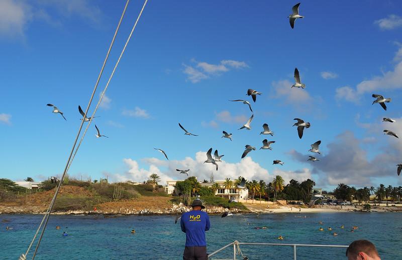 Aruba 030.jpg