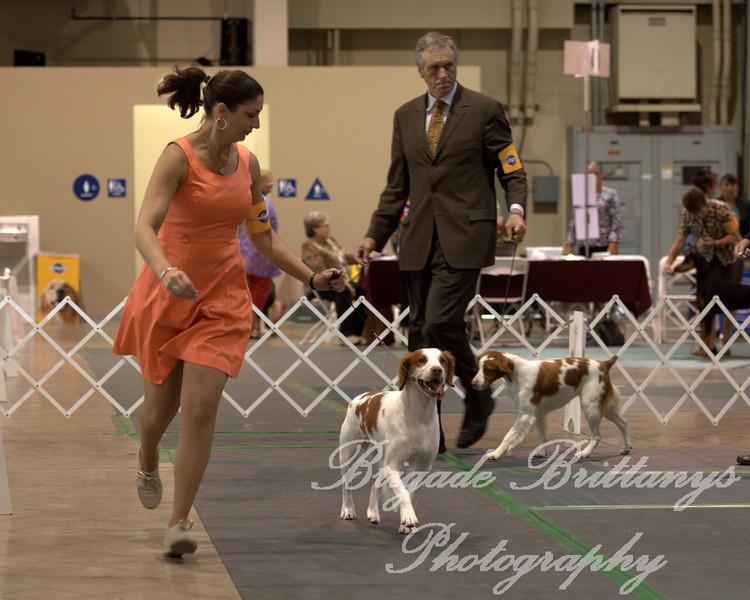 1/W/BW  29 REDLINES HUNTING FOR MY HALO JH, SR43921107 7/27/2007. Breeder: Doreen Kearney. By DC, AFC Redlines Tequila Smoker -- CH Loki's Angel On A Carousel. Doreen & Tom Kearney . Dog.