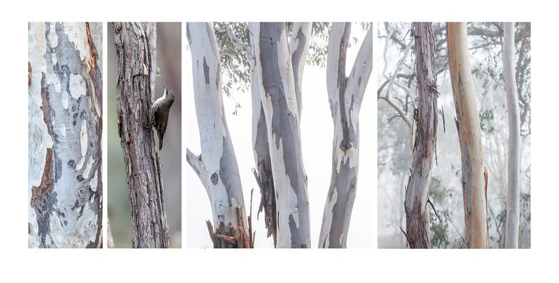 04_Pam Rooney Rhythm of trees.jpg