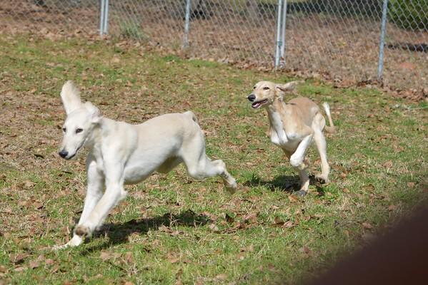 Lexee/Rafi pups 4 months plus