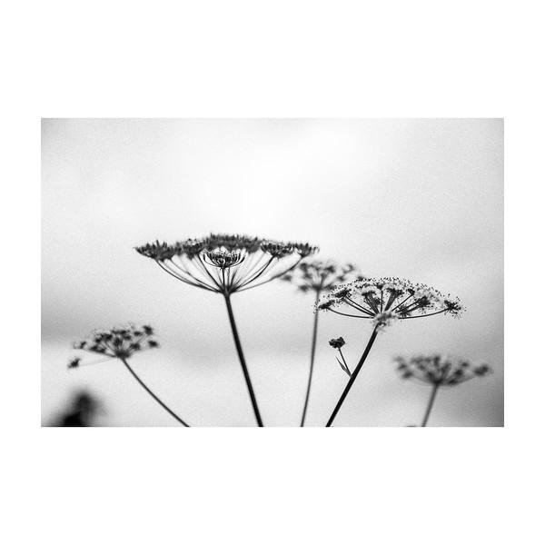 191_PlantHead_10x10.jpg