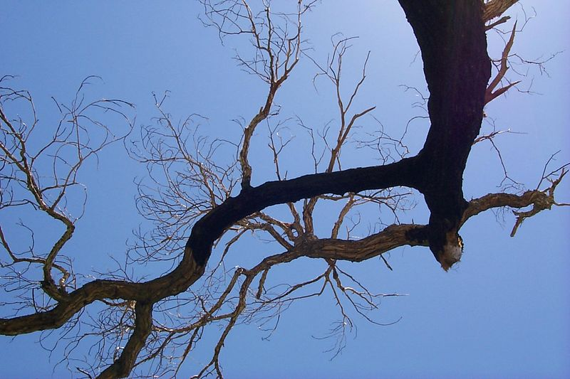 Burnt Tree   (Jun 06, 1999, 01:50pm)