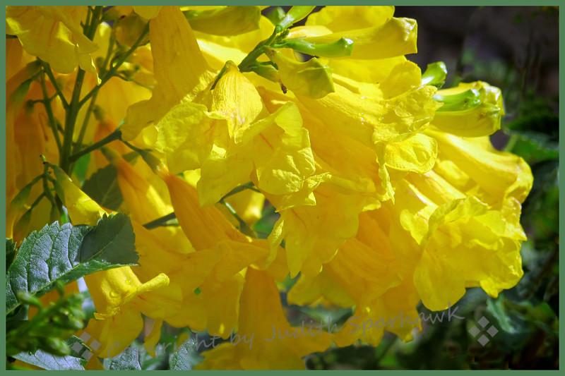 Sunshine in Autumn - Judith Sparhawk
