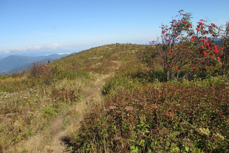 Art Loeb Trail -- 6,170'