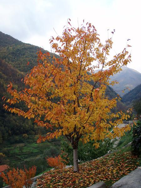 2006_11_19-11_11_17.jpg
