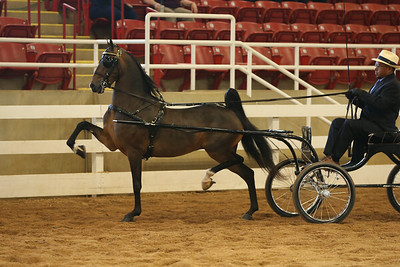 22. SHHA Breeders STAKE – Three Year Old Harness Pony