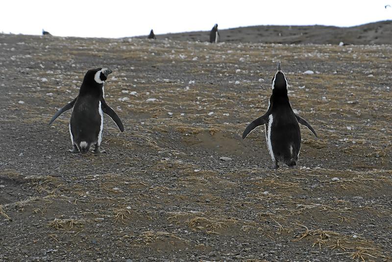 Penguin_Colony_059.jpg