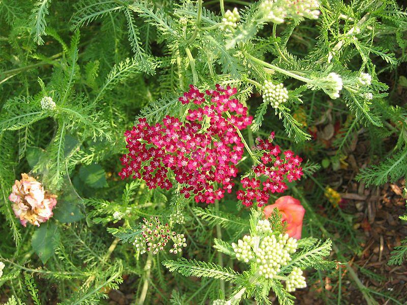 garden-2006-07-0454_std.jpg