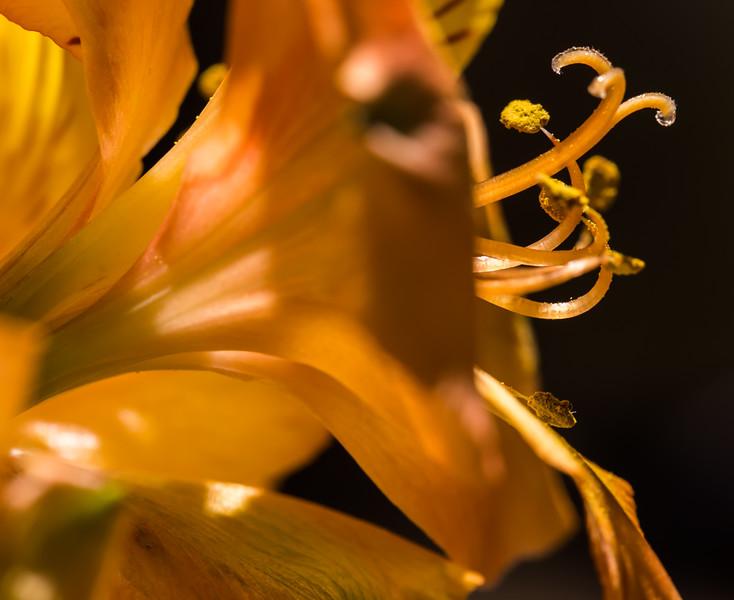Flower 11-17-2016c.jpg
