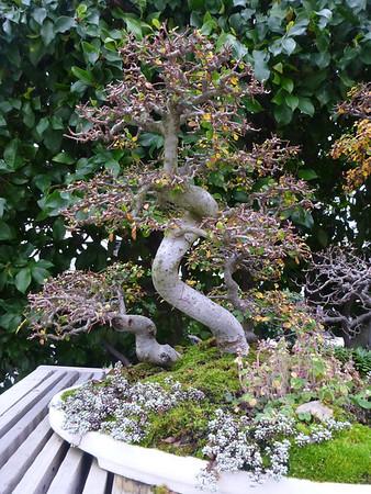 Arboretum Bonsai