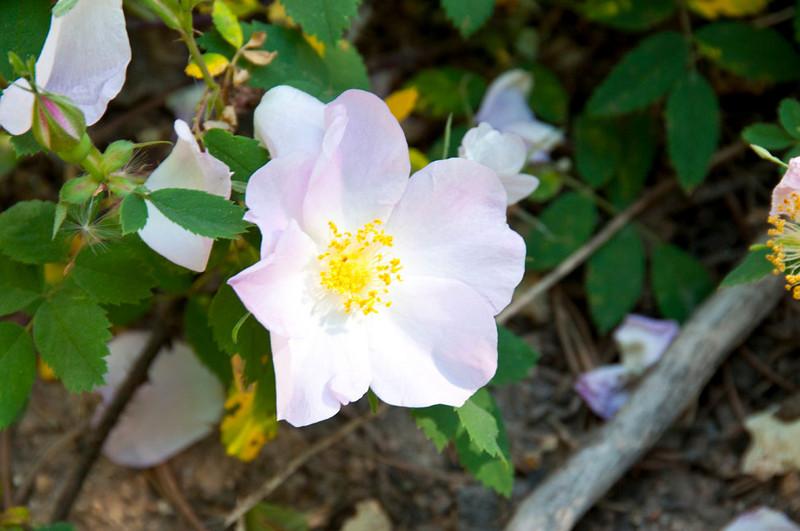 Wildflower(1).jpg