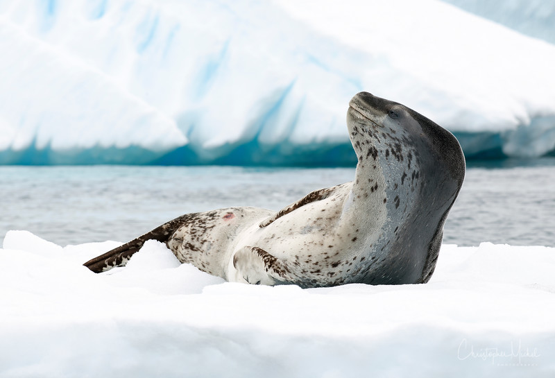 icebergs pleneau island_d3x_20130106_8512.jpg