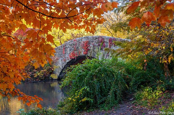 Peak Colors in Central Park November 2020