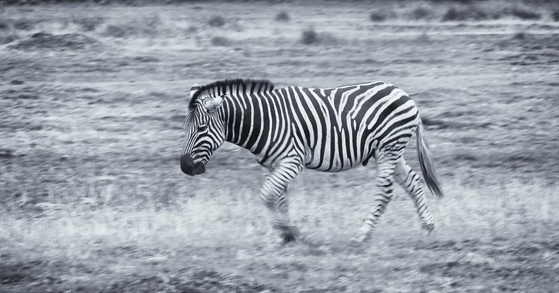 Botswana-20121127-1922-Edit.jpg