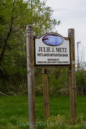 PWC 2014 Julie Metz Wetlands
