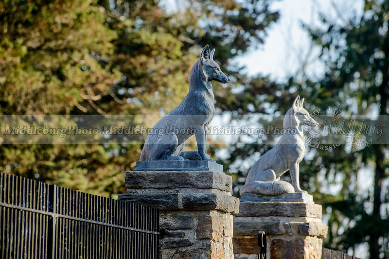 Mr. Stewart's Cheshire Foxhounds 1-2-2016