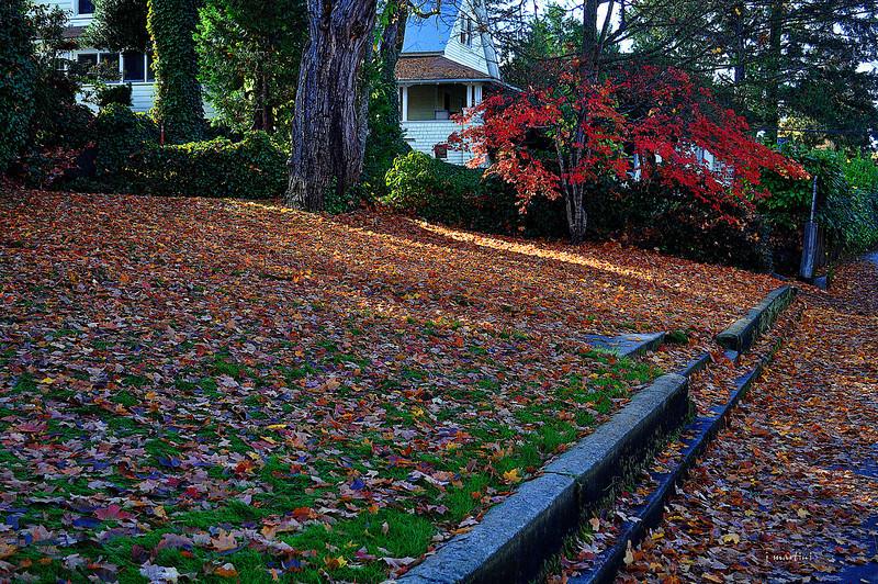 rake the lawn 9-1-2012.jpg