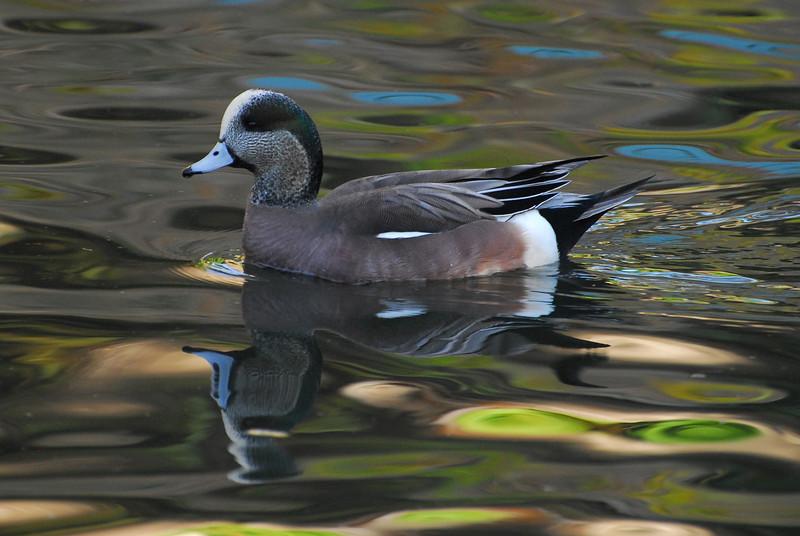 Duck2 2