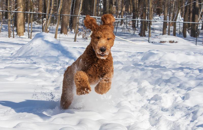 Calvin-7months-snow5-January2019.jpg
