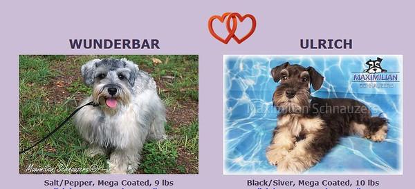 Wunderbar & Ulrich Puppies, DOB 6/01/2020