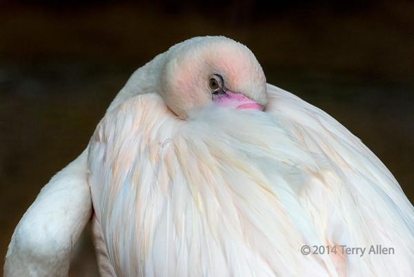 Parque Aves, Foz do Iguazu, Brazil