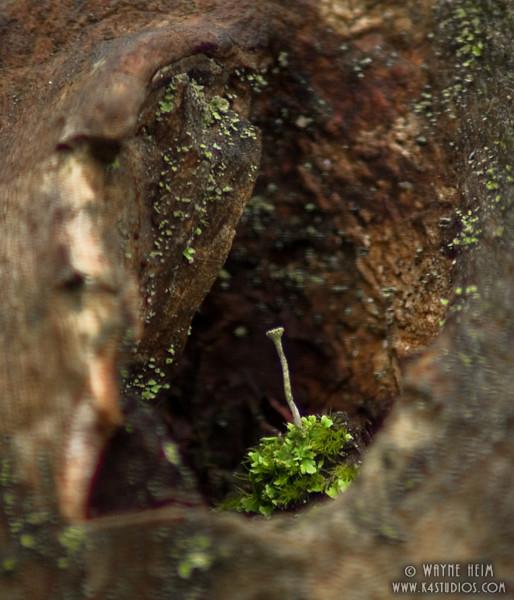 Natural Nail   Photography by Wayne Heim